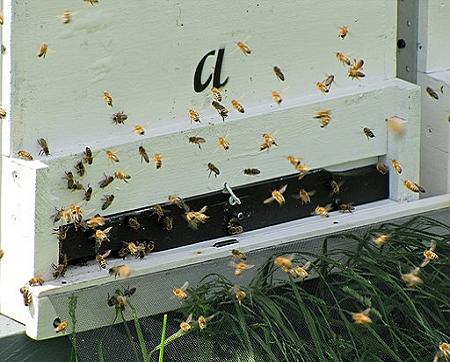 Darstellung eines Bienenstocks