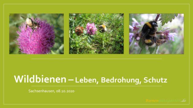 Vortrag Wildbienen