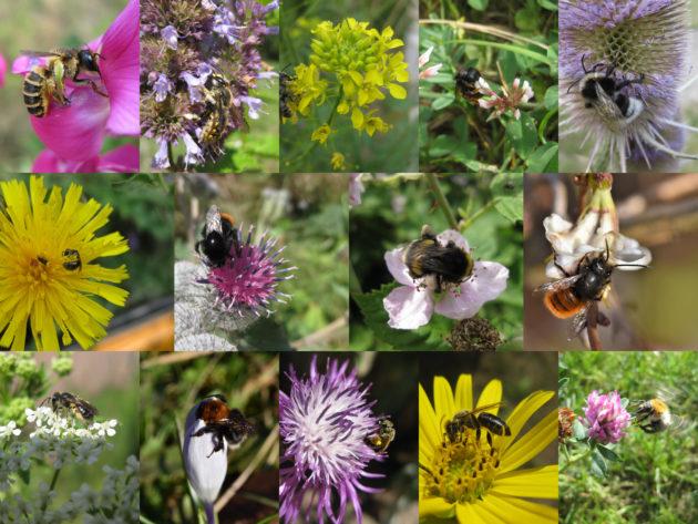 bienenfreundliche Pflanzen - eine Übersicht verschiedener Pflanzen