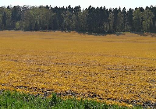 Darstellung eines Feldes nach dem Einsatz von Pflanzenschutzmitteln